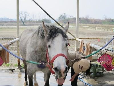 馬と幸せな乗馬