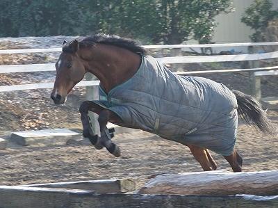 生き生きした馬、可愛い馬