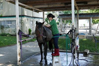 乗用馬販売
