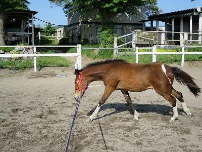 新馬調教 馬に考える余地を与えること