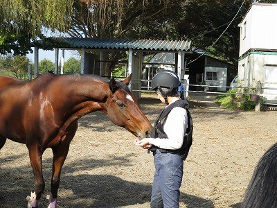 馬との話し方教えます