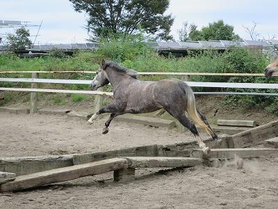 健康で元気な馬