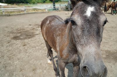 子馬は本当にかわいいですね(^^)