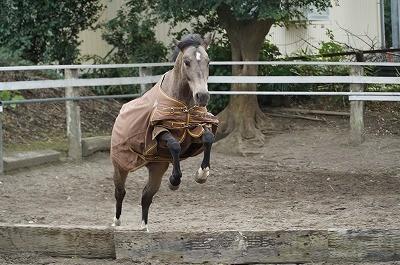 のびのび自由にジャンプする馬