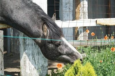 馬と話せる