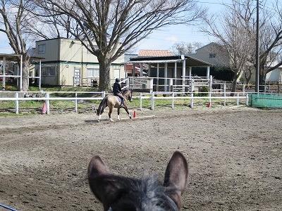 早春の馬達