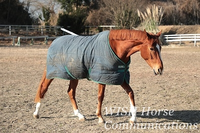 心が震える乗馬
