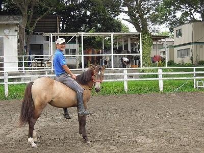 初めて人間を背中に乗せた馬