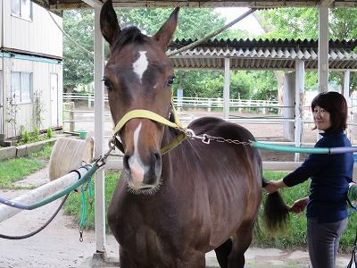 馬に安心を与える