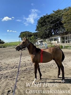 乗馬の調教