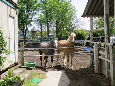 ウィッシュの可愛い馬達