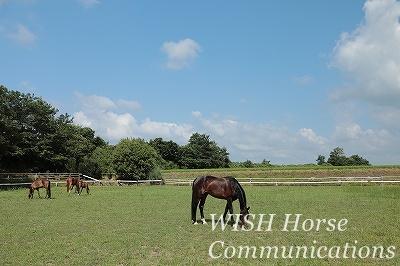 放牧のある乗馬クラブ