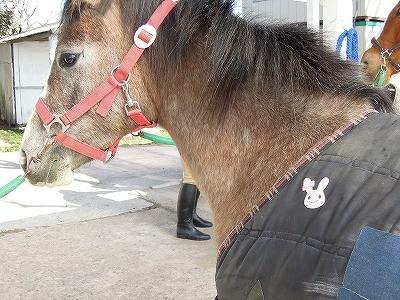 素敵な馬着うさちゃんアップリケ