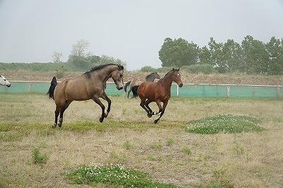 自由で元気な馬達