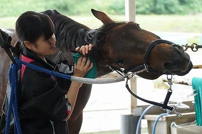 馬が気持ちいい手入れは簡単
