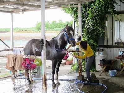 気持ち良さそうな馬