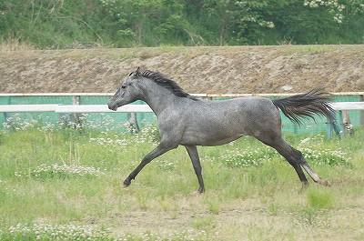 のびのびと良い馬を育てます