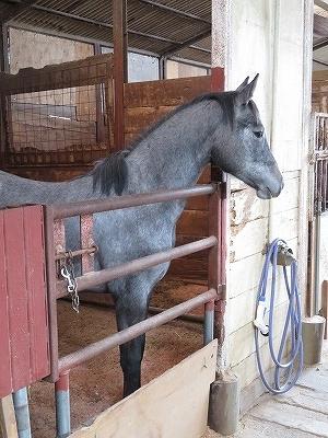 乗用馬の生産管理は大変です。馬は勝手に育ちません!