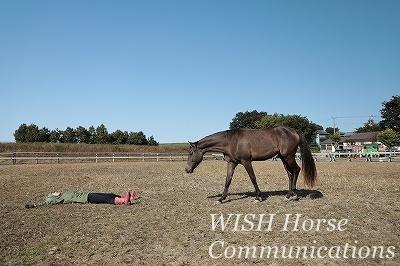 癒される乗馬