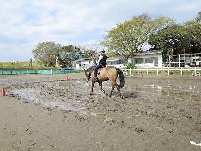 雨上がりキラキラ乗馬