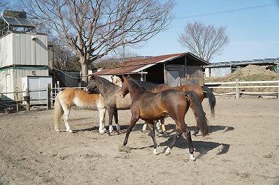 楽しい馬達の会話が見られます