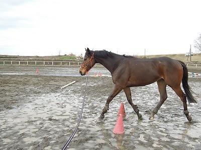 馬との距離