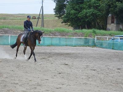 ひたむきに馬と理解しあう努力を