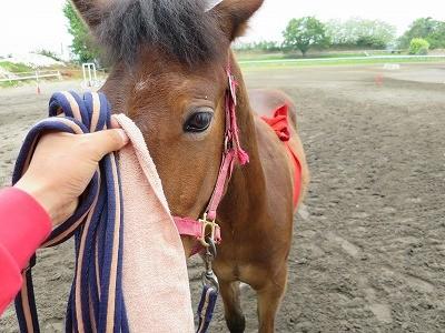 新馬調教 馬に確認をとる