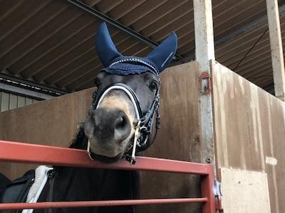 馬の良さがクラブの特徴です