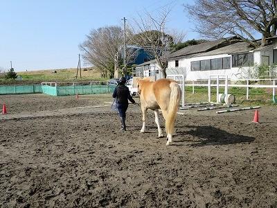 馬とのコミュニケーションレッスン
