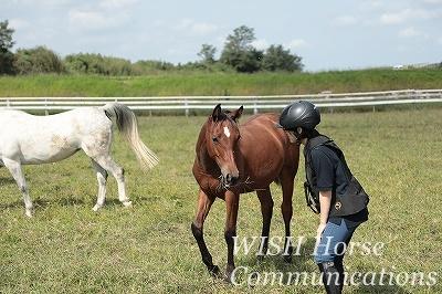乗馬 馬と仲良く
