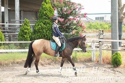 乗馬とリラックス