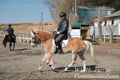 できる馬に育てる