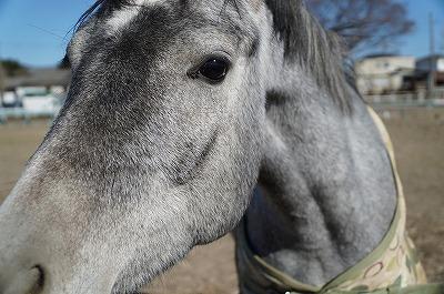 問題は馬の言葉を聞いてそれにどういうふうに対応するか。