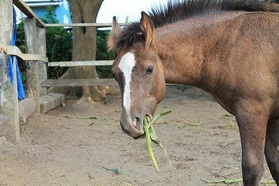 馬とトウモロコシ