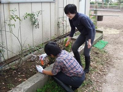チューリップを植えました