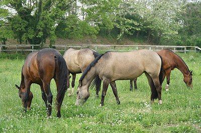 徹底した管理でいい馬を作る
