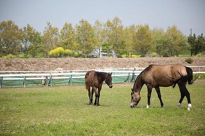 ほのぼの馬の親子が見られます