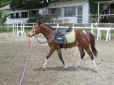 新馬調教 馬のボディーランゲージ