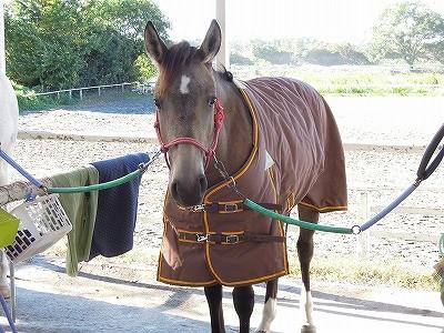 馬も服を着るんです