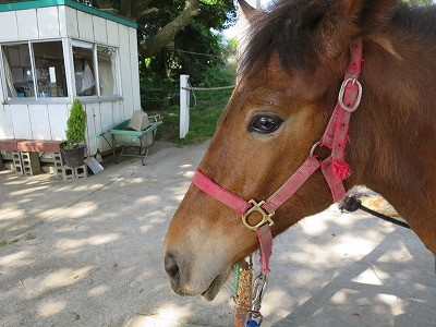 新馬調教 信頼のサイン