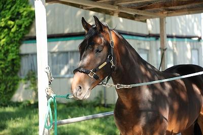 ピカピカの美しい馬