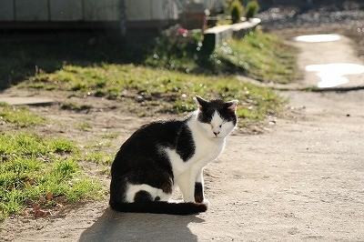 ウィッシュの猫たち