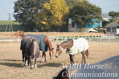 理解し合う乗馬