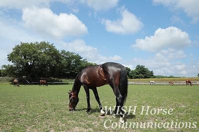 馬がいる風景