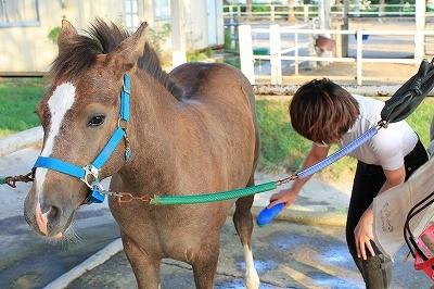 馬への想い