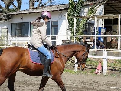 ドイツの乗馬
