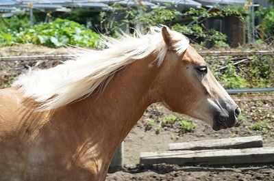 風の中の馬達