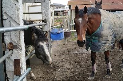 馬の好奇心が嬉しい