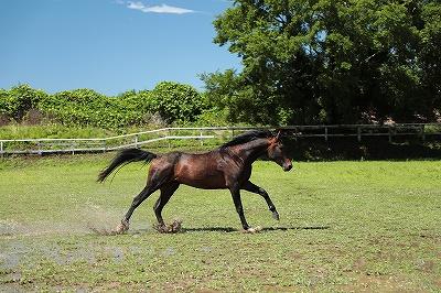 素直に呼応する馬